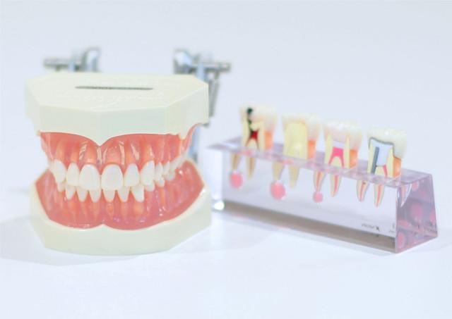 長津田の口腔外科「中村歯科クリニック」で顎関節症の治療を!~摂食嚥下に関する相談も受付中~